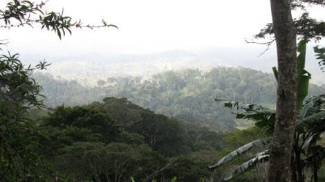Usambara Mountains - Tropischer Regenwald