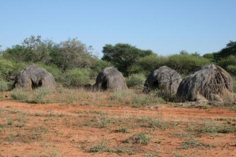 Kalahariwueste San Rundhuetten