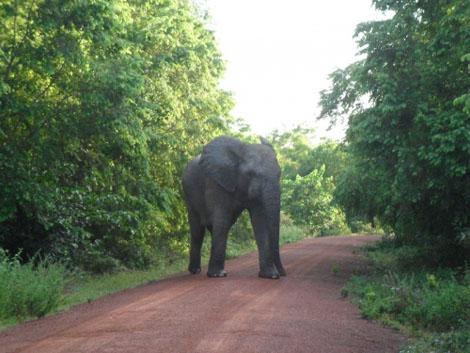 Mole Nationalpark - Elefant