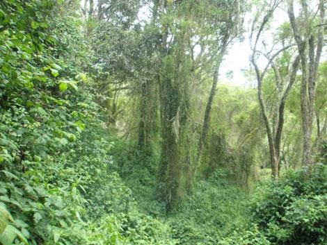 Urwald Landschaft