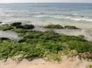 Kapverden Boa Vista Strand Algen