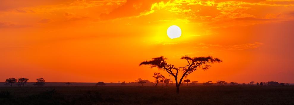Savanne im Sonnenuntergang