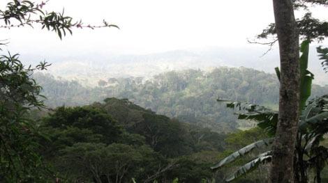 Regenwald in Afrika: Erstaunliche Vielfalt