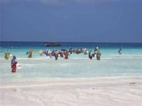Frauen auf Fischfang - Sansibar