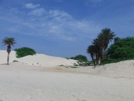 Kapverden Boa Vista Strand Palmen